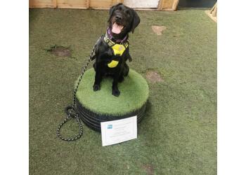 Kate's Family Dog Training