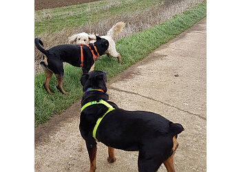 Lead On Dog Walking Services