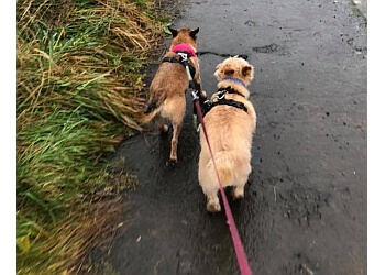 3 Best Dog Walkers In Wigan Uk Top Picks January 2019