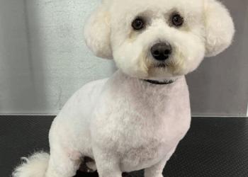 Lisa's ulti-mutt dog grooming