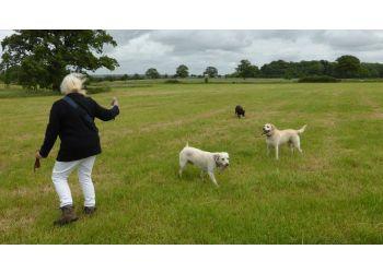 Llantwit Fardre Dog Walking