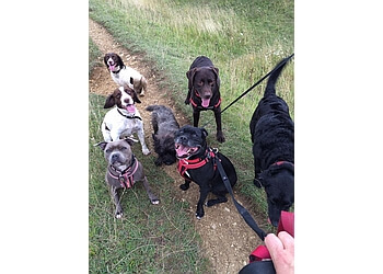 3 Best Dog Walkers In Gloucester Uk Top Picks January 2019
