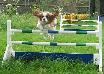 Mic Martin Dog Training