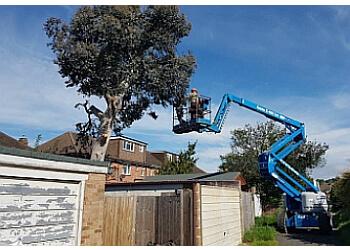 Mulholland Tree Surgery
