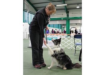 New Forest Dog Training Academy