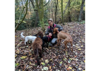New Forest Pet Care