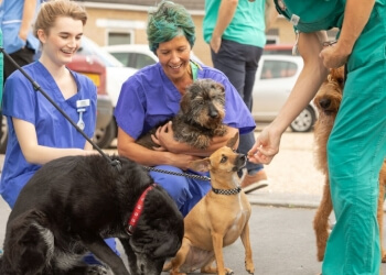 3 Best Vets in Lincoln, UK - Expert Recommendations