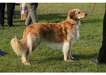 Paws4Life