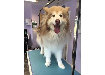 Paws and Relax Professional Dog Grooming