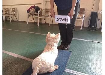 Paws-ative dog training