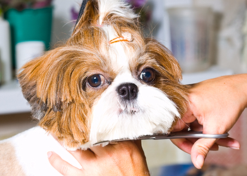 Pet Dogs Mobile Dog Grooming