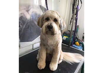 Picture Pawfect Groomers