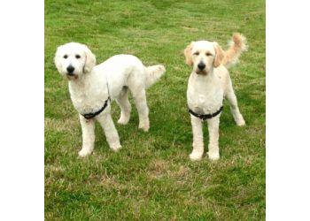 Platinum Paws