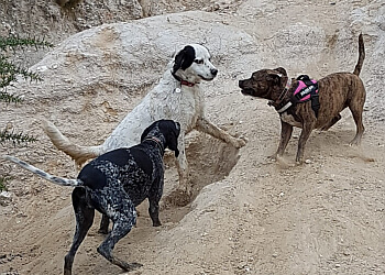 Pooches of Poole