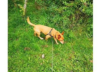 Poochies Dog Walking & Pet Care