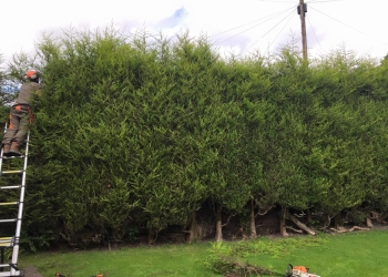 Popular Tree Care Limited
