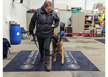 Preston Trick Dogs