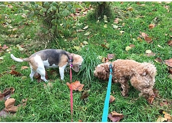 Puppy Tales Pet Services