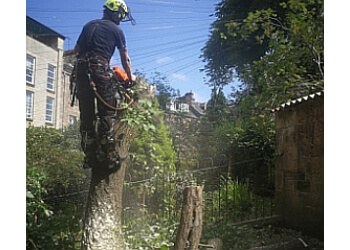 Red Branch Tree Services