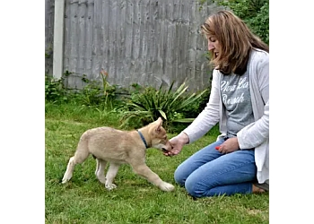 Sam Redmond Dog Training and Animal Behaviour