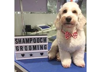 Shampooch Professional Dog Grooming by Cathryn Gleave