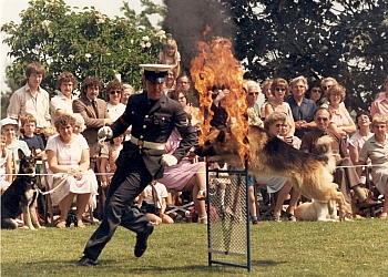 Social Behaviour Dog Training