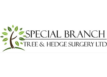 Special Branch Tree & Hedge Surgery Ltd