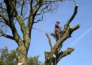 Stockport Tree Surgeon