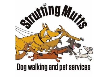 Strutting Mutts