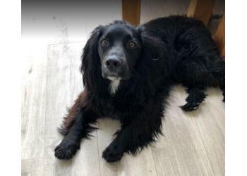 Sue's Paws
