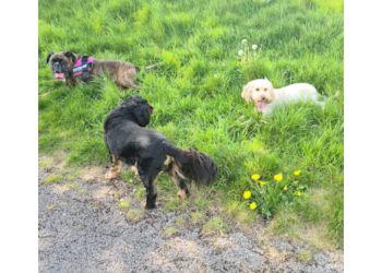 Sunnydays Dog Walking And Pet Sitting Service