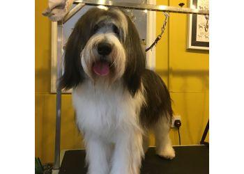 Taff Tail Dog Groomer