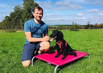 Tail Academy Dog Training