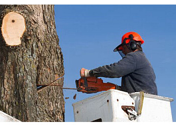 Tealing Tree Services