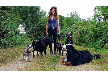 The Countryside Dog Walker