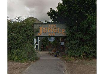 The Jungle Zoo