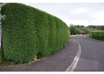 The Tree Company NI