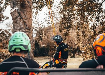 The Tree Fellas Hull Ltd
