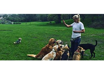 Top Dog Training School & Home Boarding