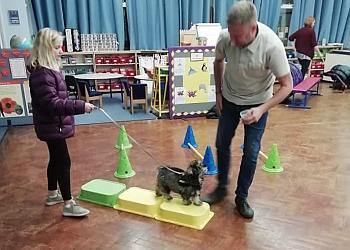 Training Tails Dog Training