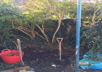 Transition Gardening
