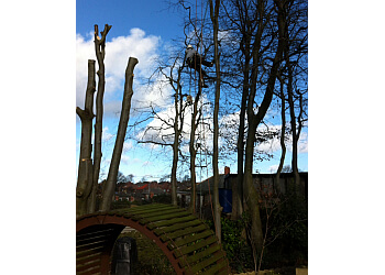 Tree Dismantle of Yorkshire