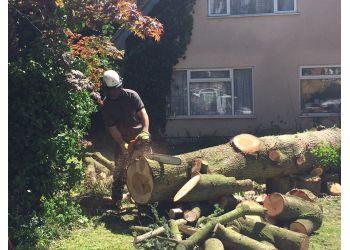 Tree Kings
