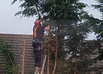 WF Tree Services