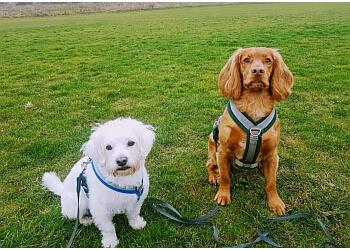 Waggy Canine Walkies