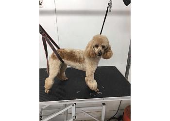 Wags Dog Salon