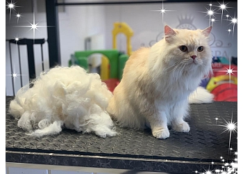 Wags Pet Spa Dog & Cat Grooming - Daycare