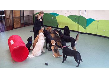 Washington Pet Services