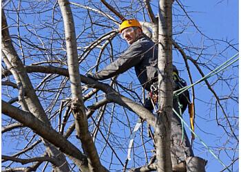 West Bromwich Tree Surgeons