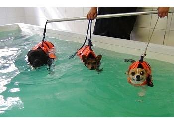 WitsEnd® Pet Behaviour Practice